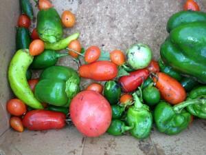 AFB garden harvest