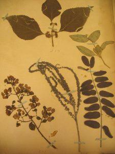 Plant speciman page