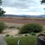 The vineyard where we had lunch today