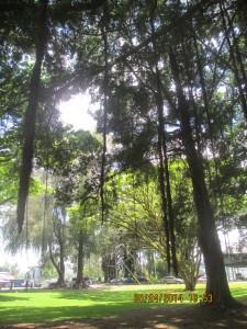 Under the Banyan Tree in Liliuokalani Gardens