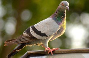 bird-368924_640