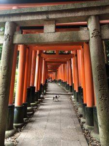 Fushimi Inari Shrine cat